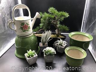 Pottery,Bonsai Rubber Plant Lot with Watering Pitcher