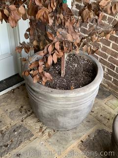 (A) Large Outdoor Cement Pot