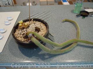 Parodia and Cleistocactus (Cactus in a Pot)