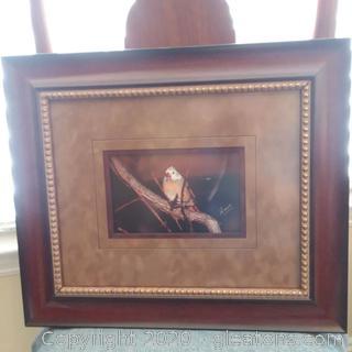 Framed Bird Print/Photograph