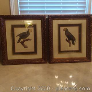 2 Beautifully Framed Parrot Prints