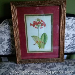 Red Curtis Botanical Art Print Framed and Matted