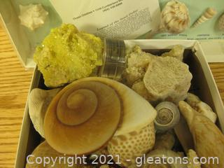 Large Collection of Sea Shells