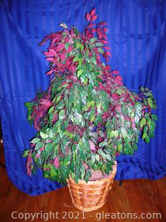 Silk Ficus Tree in Beautiful Basket