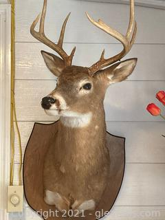 12 Point Mounted Deer Head
