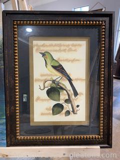 Entrancing Bird Framed Print