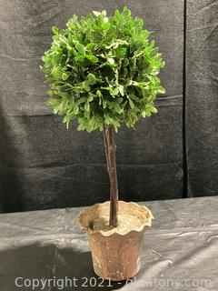 Artificial Boxwood Topiary Tree in Modern Gray Pulp Planter