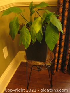 Coated Metal Plant Stand, Plastic Pot and Peace Lily