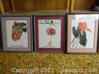 3 Framed Prints of Beautiful Flowers