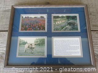Framed Photos by Dan Richards  / Texas Blue Bonnets and their Legend / Long Horn Bull / An Armadillo
