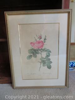 Beautiful Rosa Bifera Officials Framed Picture