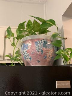 Live Plant in Ceramic Pot