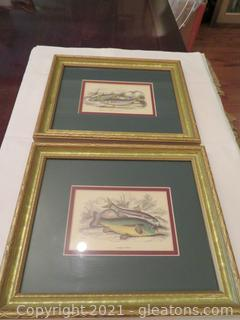 Two Framed Fish Prints