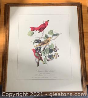 Giclee Audubon Summer Tanager Bird Print