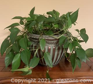 Living Houseplant in Gorgeous Metal Planter