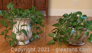 Two Living Houseplants in Ceramic/Stone Planters