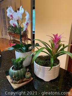 Three Live Decorative Plants