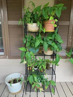 Patio Planter Shelf with Plants