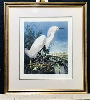 """Audubon / Havell """"Snowy Heron, Or White Egret"""" (Plate CCXLII)"""