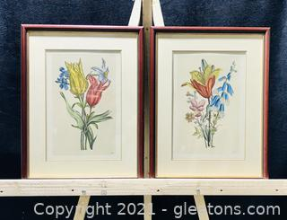 Lovely Botanical Prints by Nicholas Roberts - Set of 2