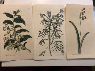 Lot of 21 Antique Hand Colored Original Botanicals Dating from late 1700's