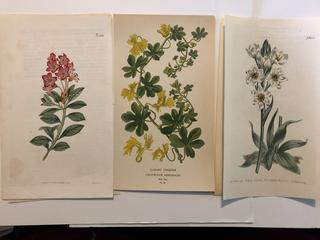 Lot of 16 Antique Hand Colored Original Botanicals Dating from late 1700's