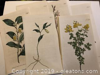 "Lot of 7 Hand Colored Antique Botanicals  ""A"""