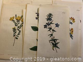 """Lot of 13 Hand Colored Antique Botanicals """"C"""""""