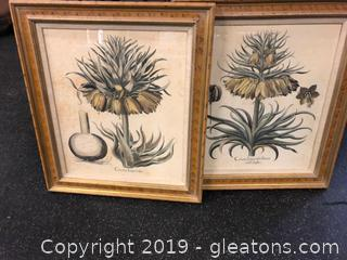 Set Of 2 Prints Corone Impericels
