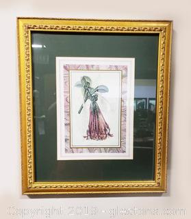 Framed Botanical Print Of Fuchsia Corymbosa