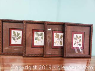 Set Of (4) Beautiful Framed Botanical Pictures