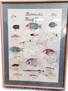 Bermuda Reef Fish Wall Art