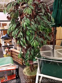6ft Ficus Silk Tree Planter Wicker