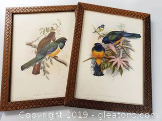 PR Of Vtg. Bird Pictures Wall Art
