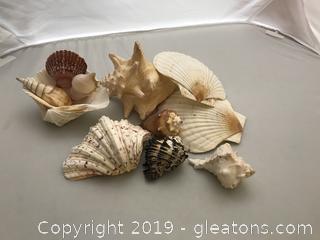 Sea Shell Lot of 11