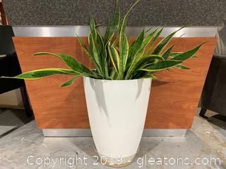 Large /snake Plant B