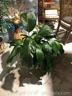 Live Green Peace Lily House Plant