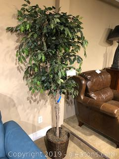 Silk Ficus Tree