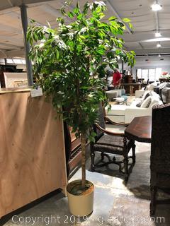 Large Silk Tree
