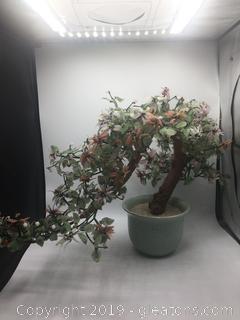 Bonsai Decorative Jade Tree