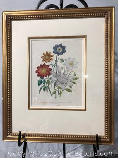 Framed Print of Floral Dahlia Crocata #PI.47