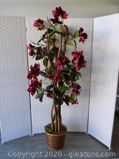 Burgundy Silk Magnolia Tree
