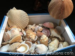 Box lot of sea shells