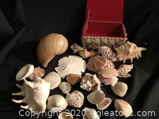 Sea shells and box covered with sea shells