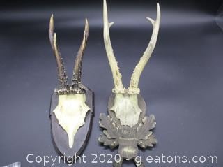 2 Pair of Mounted Antlers