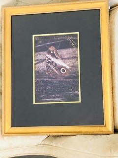Framed Photograph by T Paschal