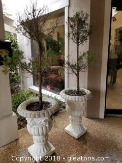Pair Concrete Planters with Trees