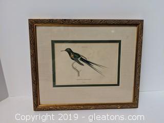 Vintage Hummingbird Trochilus Langsdorffii Plate
