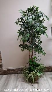 Silk Ficus Tree 6ft